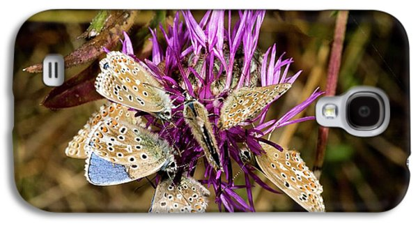 Adonis Blue Butterflies On Knapweed Galaxy S4 Case by Bob Gibbons