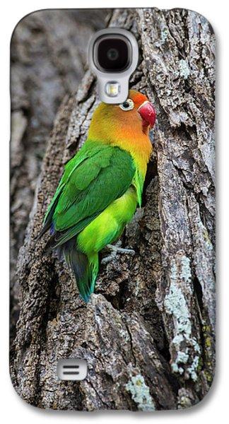Lovebird Galaxy S4 Case - Africa Tanzania Fischer's Lovebird by Ralph H. Bendjebar