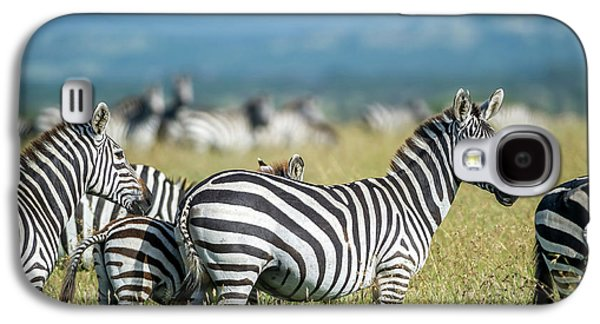 Africa, Tanzania, Zebras Galaxy S4 Case