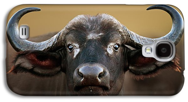 African Buffalo Cow Portrait Galaxy S4 Case