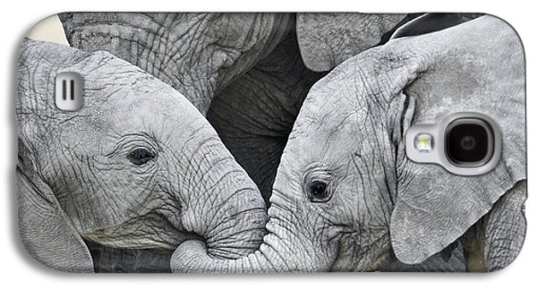 African Elephant Calves Loxodonta Galaxy S4 Case by Panoramic Images