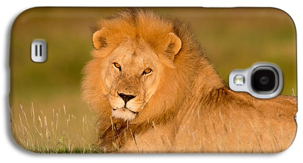 African Lion Panthera Leo, Ndutu Galaxy S4 Case by Panoramic Images