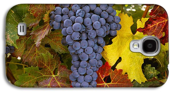 Agriculture - Mature Cabernet Sauvignon Galaxy S4 Case by Ed Young
