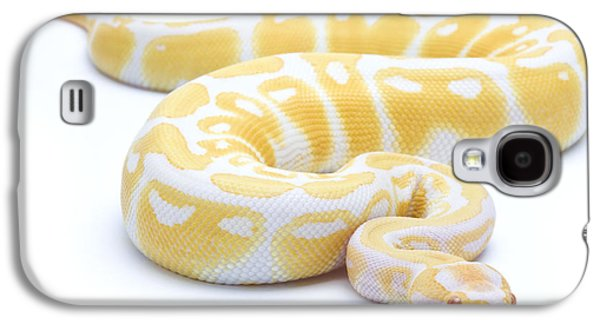 Albino Royal Python Galaxy S4 Case by Michel Gunther