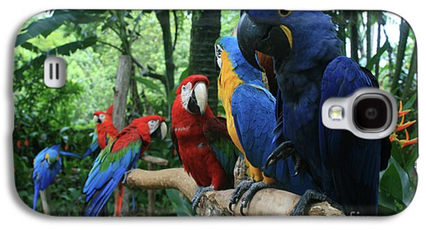 Aloha Kaua Aloha Mai No Aloha Aku Beautiful Macaw Galaxy S4 Case