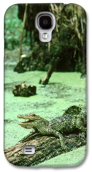 American Alligator Galaxy S4 Case by Gregory G. Dimijian, M.D.