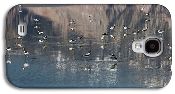 American Avocets On Owens Lake Galaxy S4 Case by Jim West