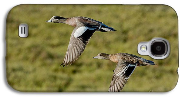 American Wigeon Pair In Flight Galaxy S4 Case by Anthony Mercieca