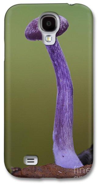 Amethyst Deceiver Galaxy S4 Case by Dave Pressland/FLPA