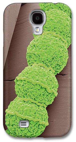 Anabaena Algae Galaxy S4 Case