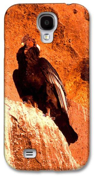 Andean Condor Galaxy S4 Case by Art Wolfe