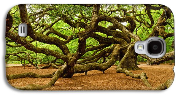 Angel Oak Tree Branches Galaxy S4 Case