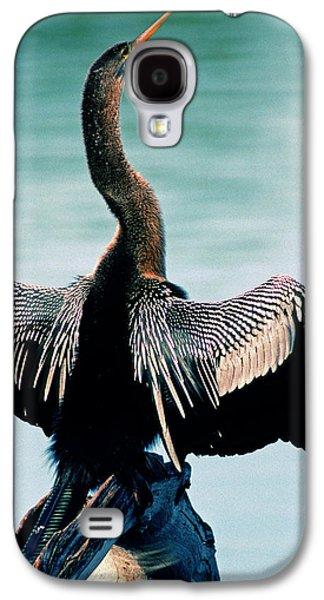 Anhinga Anhinga Anhinga Drying Feathers Galaxy S4 Case