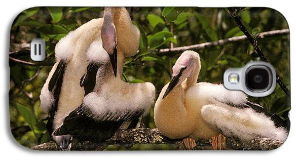 Anhinga Chicks Galaxy S4 Case by Ron Sanford