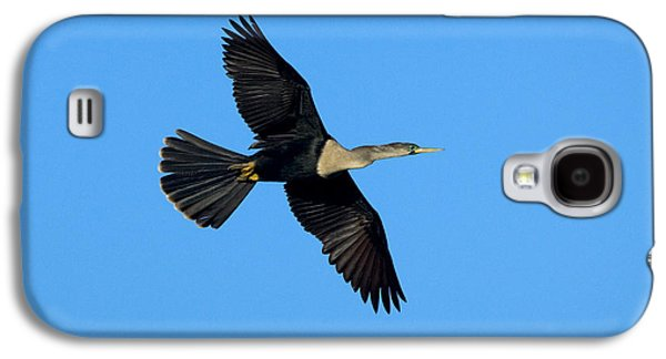 Anhinga Female Flying Galaxy S4 Case by Anthony Mercieca