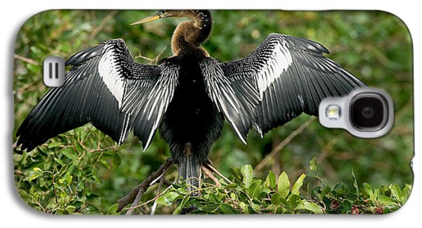 Anhinga Sunning Galaxy S4 Case by Anthony Mercieca