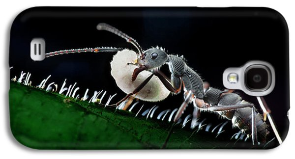 Ant Carrying Larva Galaxy S4 Case by Melvyn Yeo