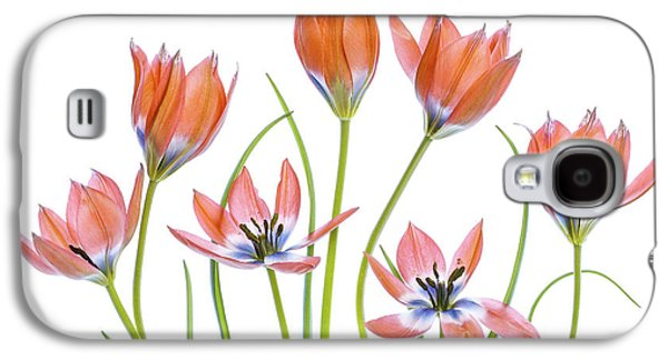 Tulip Galaxy S4 Case - Apricot Tulips by Mandy Disher