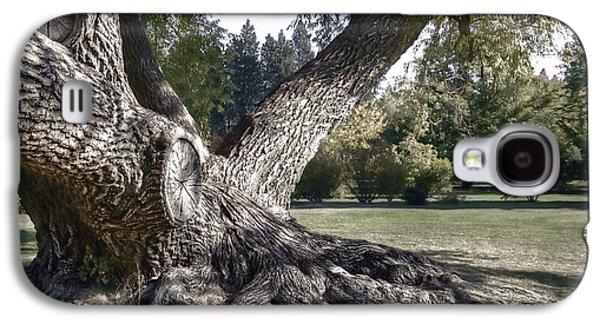 Arboretum Tree Galaxy S4 Case by Daniel Hagerman