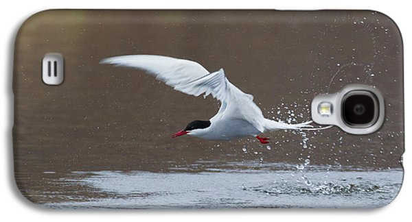 Arctic Tern Fishing Galaxy S4 Case by Ken Archer