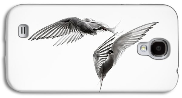 Arctic Tern - Sterna Paradisaea - Pas De Deux - Black And White Galaxy S4 Case by Ian Monk