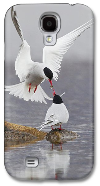 Arctic Terns, Courtship Galaxy S4 Case by Ken Archer