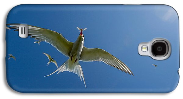 Arctic Terns Sterna Paradisaea, Flatey Galaxy S4 Case by Panoramic Images