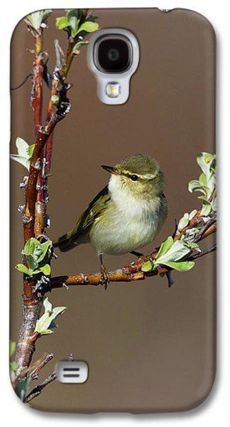Warbler Galaxy S4 Case - Arctic Warbler by Ken Archer