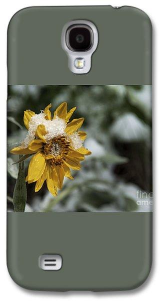 Arrowleaf Balsamroot In Snow Galaxy S4 Case by Wildlife Fine Art