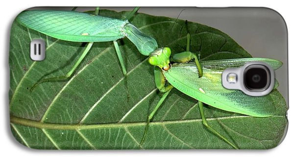 Asian Mantis Eating Her Mate Galaxy S4 Case by K Jayaram
