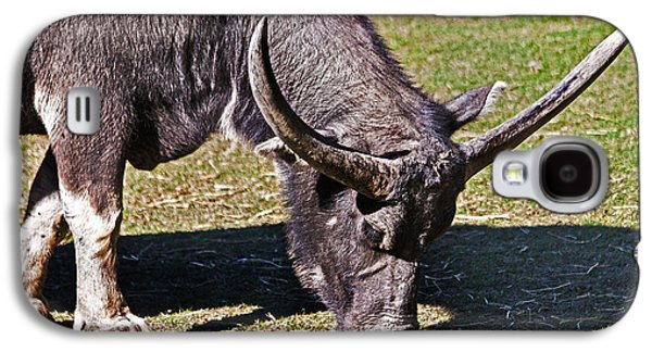 Asian Water Buffalo  Galaxy S4 Case by Miroslava Jurcik