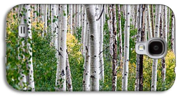 Aspen Trees Galaxy S4 Case by Steve Gadomski