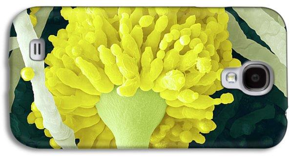 Aspergillus Fungus Conidiophore Galaxy S4 Case by Thierry Berrod, Mona Lisa Production