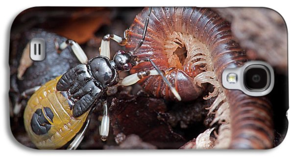 Assassin Bug Eating Millipede Galaxy S4 Case by Melvyn Yeo