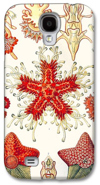 Asteridea Galaxy S4 Case by Ernst Haeckel