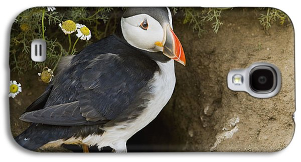 Atlantic Puffin At Burrow Skomer Island Galaxy S4 Case by Sebastian Kennerknecht