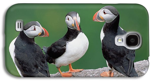 Atlantic Puffin Trio Galaxy S4 Case by Yva Momatiuk John Eastcott