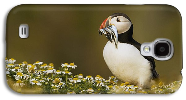 Atlantic Puffin Carrying Fish Skomer Galaxy S4 Case by Sebastian Kennerknecht