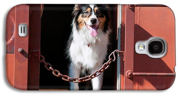Australian Shepherd In A Train Car (mr Galaxy S4 Case by Zandria Muench Beraldo