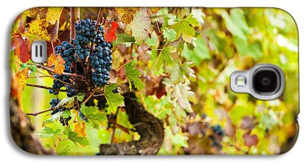 Autumn Grape Harvest Season Galaxy S4 Case by Susan Schmitz