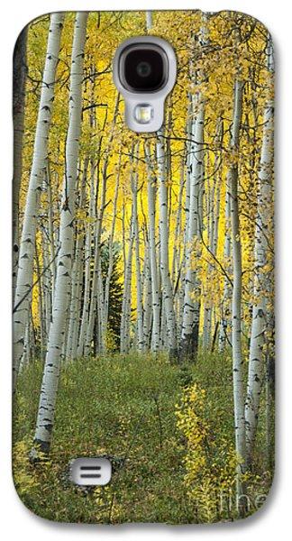 Autumn In The Aspen Grove Galaxy S4 Case