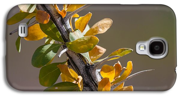 Autumn Ocotillo Galaxy S4 Case