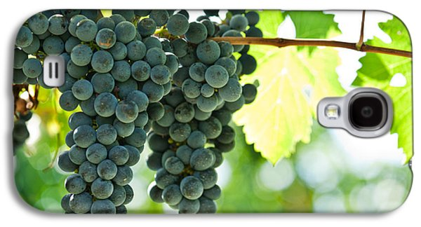 Autumn Ripe Red Wine Grapes Right Before Harvest Galaxy S4 Case by Ulrich Schade