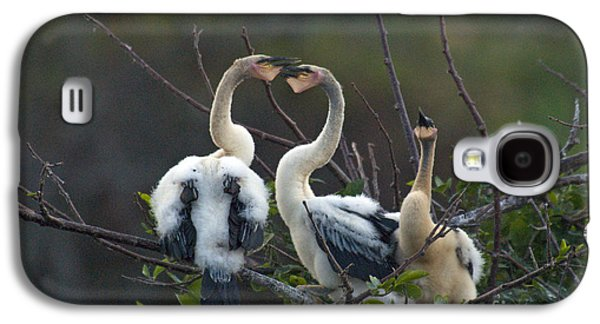 Baby Anhinga Galaxy S4 Case by Mark Newman