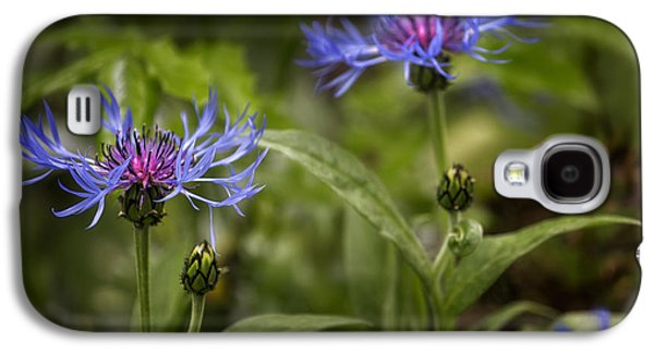 Bachelor Buttons - Flowers Galaxy S4 Case by Belinda Greb