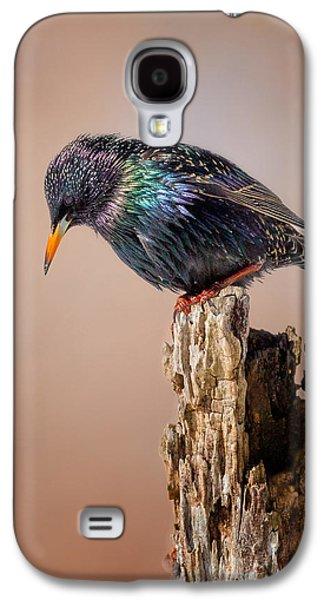 Backyard Birds European Starling Galaxy S4 Case by Bill Wakeley