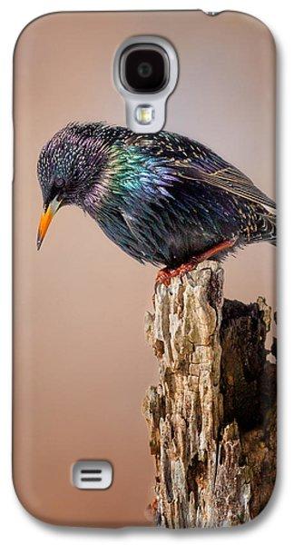 Backyard Birds European Starling Galaxy S4 Case