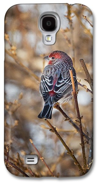 Backyard Birds House Finch Galaxy S4 Case