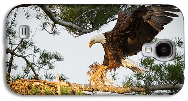 Bald Eagle Building Nest Galaxy S4 Case