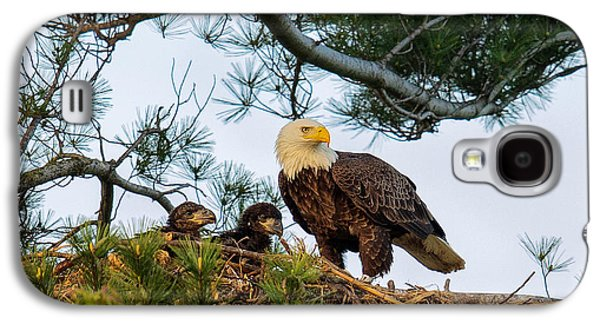 Bald Eagle With Eaglets  Galaxy S4 Case